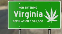 Virginia Marijuana (1)